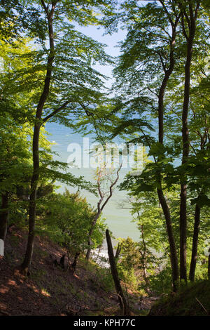 View from a forest  trail to the Baltic sea, Jasmund National park, Ruegen island, Mecklenburg-Western Pomerania, - Stock Photo