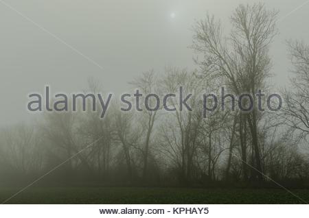 dichter nebel bei baeume und schwacher sonne - Stock Photo