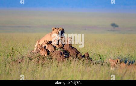 Lioness with cubs resting on anthill on grassland plains of Maasai Kopjes near Seronera, Serengeti, Tanzania - Stock Photo