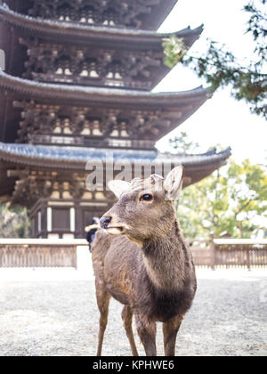One deer waiting the tourists in Nara, Japan - Stock Photo
