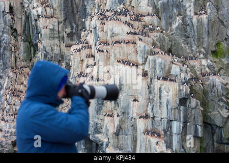 Tourist taking pictures of Alkefjellet seabird colony of thick-billed murres / Brünnich's guillemots (Uria lomvia), - Stock Photo