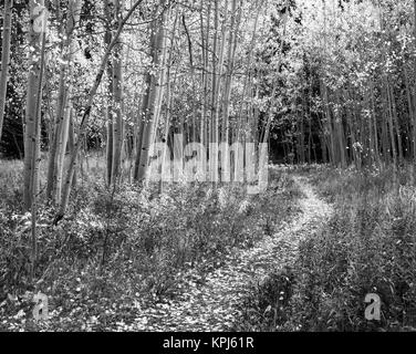 USA, Kentucky, Louisville, View of road (Large format sizes available) - Stock Photo