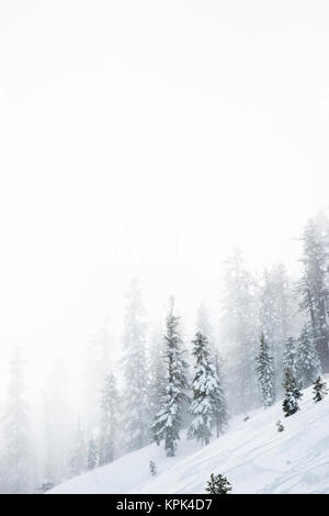 A steep, snow covered slope in the mountains with snow blowing and snow covered trees, Tahoe - Stock Photo