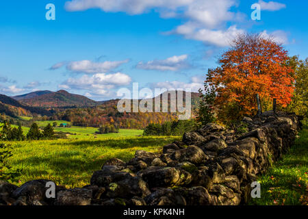 Landscape of autumn coloured forests on the hills and a stone wall across a field in the foreground; Iron Hill, - Stock Photo