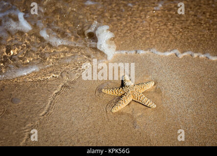 Close-up of a starfish and wave on a beach; Maui, Hawaii, United States of America - Stock Photo