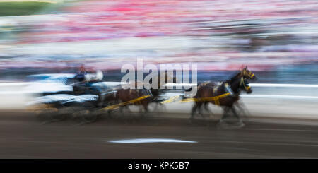 Motion blur of cowboys riding in a carriage behind a team of horses in front of spectators in the stands at the - Stock Photo