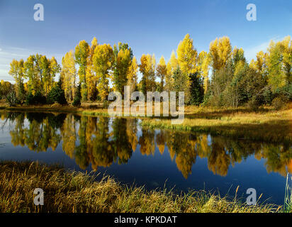 USA, Wyoming, Grand Teton National Park, Coniferous tree reflected in Beaver Pond (Large format sizes available) - Stock Photo
