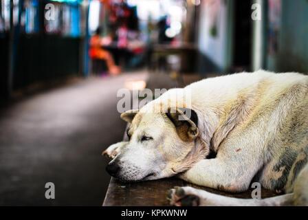 Sleeping street dog - Stock Photo