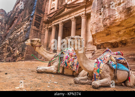 Bedouin camel rests near the treasury Al Khazneh - Stock Photo