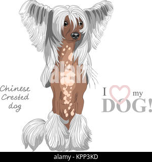 vector dog Chinese Crested breed - Stock Photo