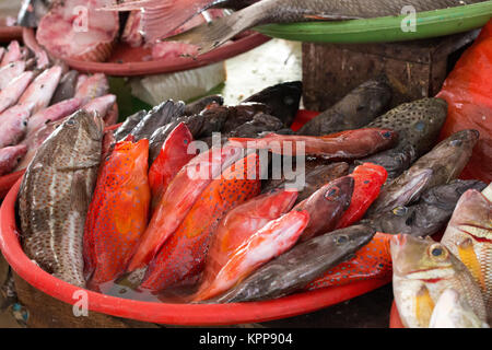 Fishes at market in Indonesia - Stock Photo