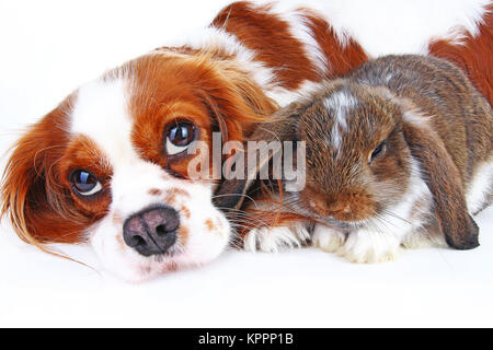 Animal friends. True pet friends. Dog rabbit bunny lop animals together on isolated white studio background. Pets - Stock Photo