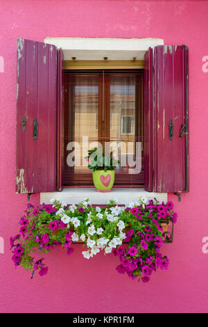 Colour contrasts in typical Burano window and window box floral display - Burano a colourful  Italian island village - Stock Photo