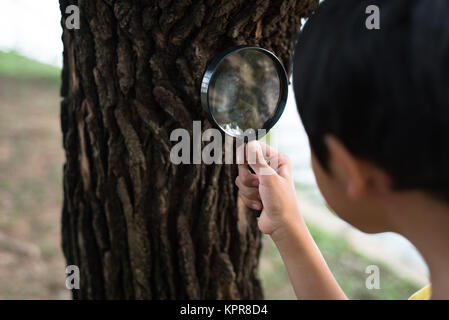young asian boy examine a tree bark using a magnifying glass. hobby concept - Stock Photo
