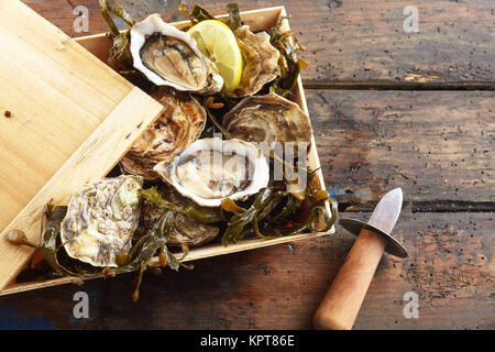 Wooden box of fresh marine oysters, some already opened, and seaweed with a shucking knife on the side and a slice - Stock Photo