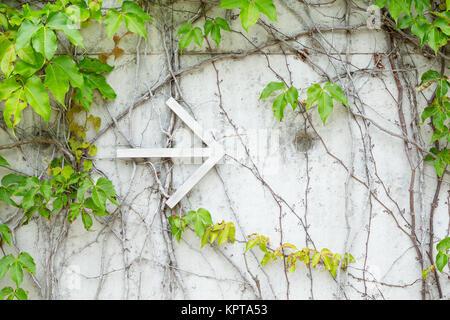 Green Creeper Plant on wall - Stock Photo