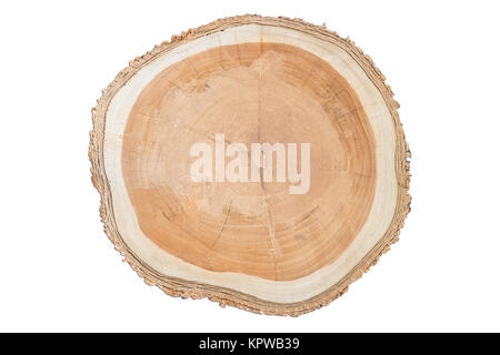 Close-up surface of wooden cut isolated on white background - Stock Photo