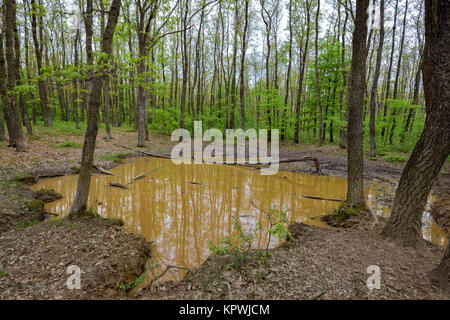Wallow in the forest - Stock Photo