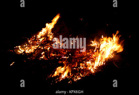 Forest under Fire - Stock Photo
