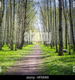 Alley shined by solar beams in spring park - Stock Photo