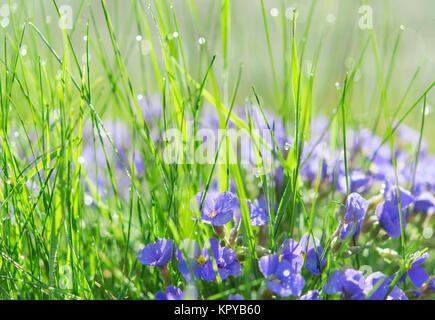 Backlit droplets morning dew on summer sunlit glade - Stock Photo