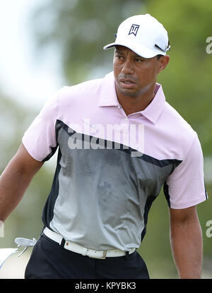DORAL, FL - MARCH 05: Tiger Woods participates in the pratice round of the World Golf Championships-Cadillac Championship - Stock Photo
