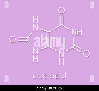 Uric acid molecule. High blood levels lead to gout disease. Skeletal formula. - Stock Photo