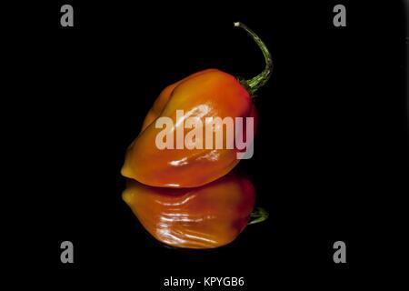 orange habanero pepper - Stock Photo