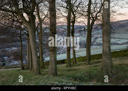 Twenty trees, a group of mature Beech trees on a hillside above Hayfield in Derbyshire, England. A cold and clear - Stock Photo