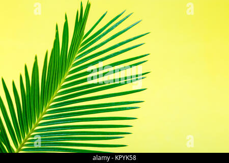 Tropical Background Palm Trees Branches. Holiday. Travel. Copy space - Stock Photo