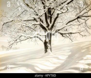 DE - BAVARIA: Wintertime on Kalvarienberg, Bad Toelz - Stock Photo