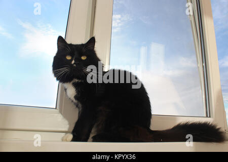 black cat sits on the window-sill - Stock Photo
