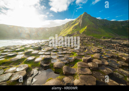 The Giant's Causeway at dawn on a sunny day with the famous basalt columns, the result of an ancient volcanic eruption. - Stock Photo
