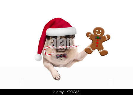 cute Christmas pug dog with santa hat and candy cane, holding up gingerbread man cookie, hanging on white banner, - Stock Photo