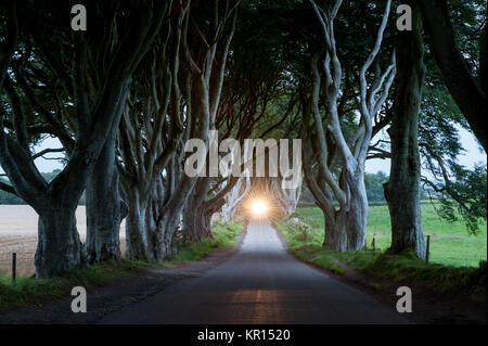 The Dark Hedges, a beautiful avenue of beech trees, at sunset with car lights in the distance. Ballymoney County - Stock Photo