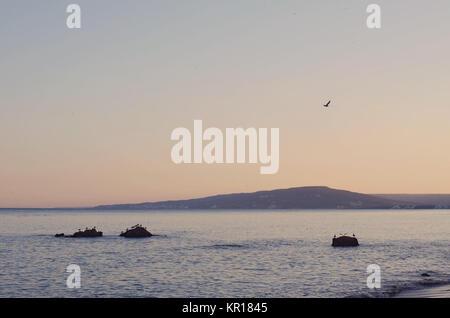 Sunset sky at sea coastline , group of Lesser Black-backed Gull on the rocks. Serene scene. - Stock Photo