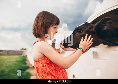 Girl stroking a baby cow - Stock Photo