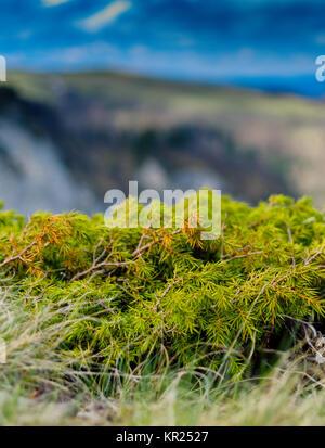 Vertical mountain moss detail closeup - Stock Photo