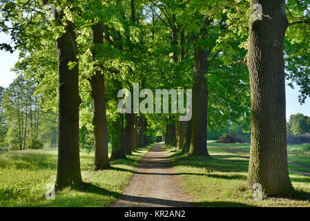 Oaken avenue, cloister of Lehnin, Brandenburg, Germany, Eichenallee, Kloster Lehnin, Deutschland - Stock Photo