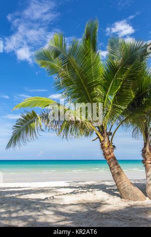 Palm trees on beautiful tropical beach on Koh Kood island in Thailand - Stock Photo