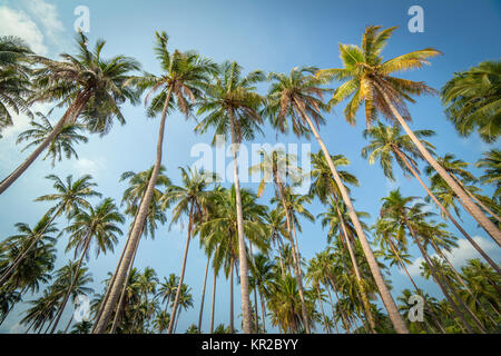 Palm trees against blue sky on Koh Kood island in Thailand - Stock Photo