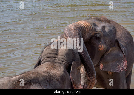 Elephants bathing in the river - Stock Photo