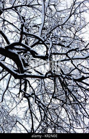 bare branches in winter  - Stock Photo