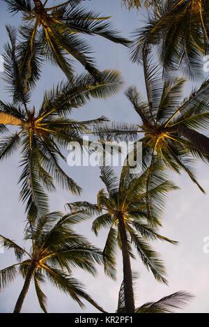 Palm Tree Sky - Stock Photo