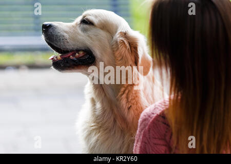 Image from back of woman with labrador - Stock Photo