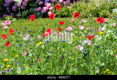 colorful wildflowers on the summer meadow in a garden - Stock Photo