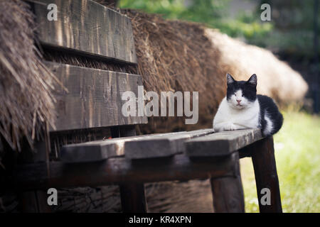 cat chilling on the porch - Stock Photo