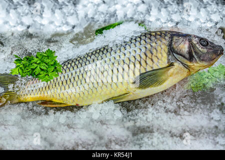 Common Carp Fish on ice at the seafood booth. - Stock Photo