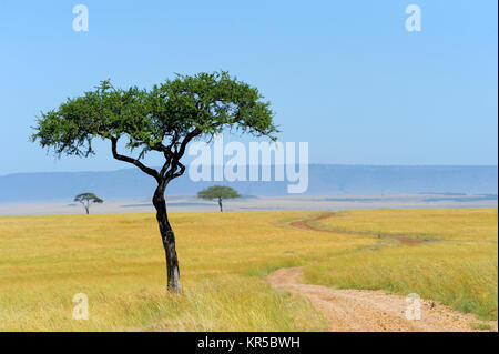 Savannah landscape in the national park in kenya - Stock Photo