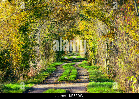 Autumnal nature reserve Kirchwerder of Meadows in Hamburg, Germany, Europe, Herbstliches Naturschutzgebiet Kirchwerder - Stock Photo